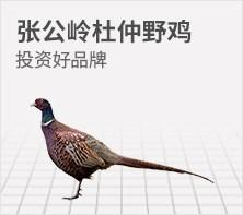 张公岭杜仲野鸡