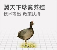 翼天下珍禽养殖
